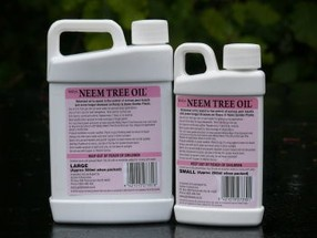 Neem Tree Oil